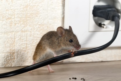 Pest Control in Newbury Park, Gants Hill, IG2. Call Now! 020 8166 9746
