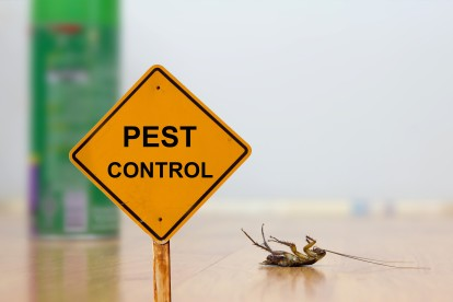Pest Contol in Newbury Park, Gants Hill, IG2. Call Now 020 8166 9746